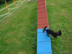 Agility mit little dog