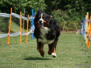 Dä schnällst Inu Hund 2015