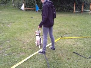 Jugend und Hund - Longieren