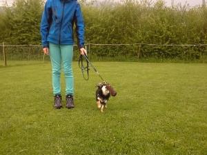 Jugend und Hund März-Mai