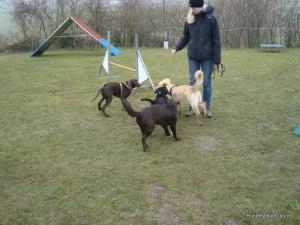 Junghunde-Kurs März 2011